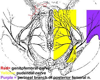 Clinical Case - Perineum & External Genitalia